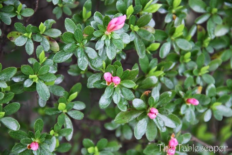 Spring Blossoms5