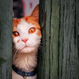 Freedom! by Martin Dvořák - Animals - Cats Portraits