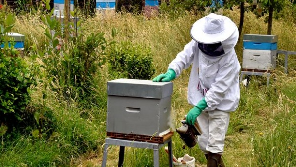 Le transport des ruches responsable de la propagation d'une pandémie fatale aux abeilles
