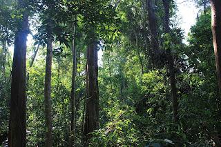 cesta do hloubi jungle na hranici Kambodža / Laos - Národní park Virachey