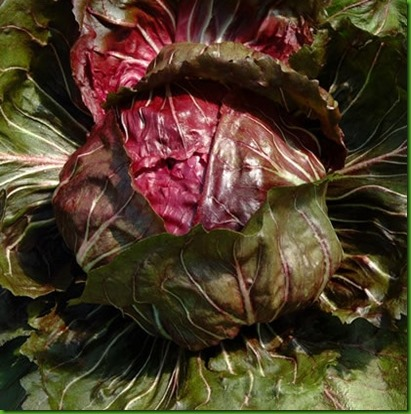 Chicoria Palla Doce Precoce