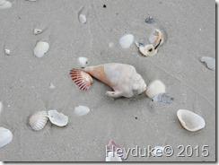Barefoot Beach and Taste of Bonita 021