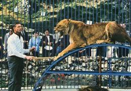 vendeuil lion