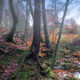 Misty Autumn by Phil Robson - Landscapes Weather ( wood, seasons, autumn, forest, mist )