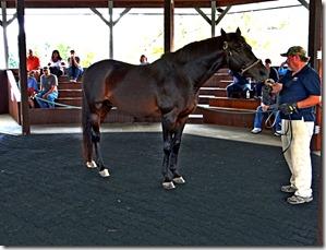 KY horse park 066