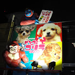 pet salon osaka in Osaka, Osaka, Japan