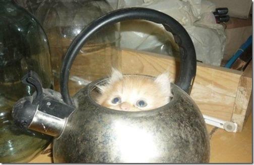 gatos sitios para esconderse (21)