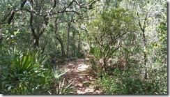 Trail south through scrub