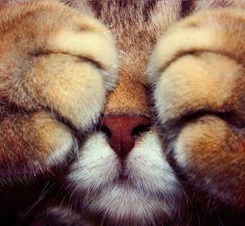 Кот закрывает глаза лапами