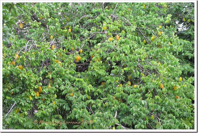 07-22-ep-starfruit2
