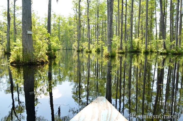 Adventure through swamp