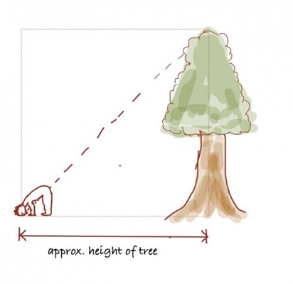 How tall is a tree