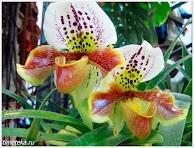 Орхидеи. Ботанический сад МГУ.