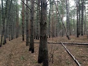 лес7.jpg