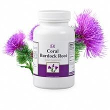 Корал Бурдок Рут / Coral Burdock Root