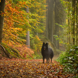 So, Are you Coming Now ? by Marco Bertamé - Animals - Dogs Portraits ( vlack, colorful, autumn, colors, fall, ernesto, path, trees, way, forest, leaves, dog )