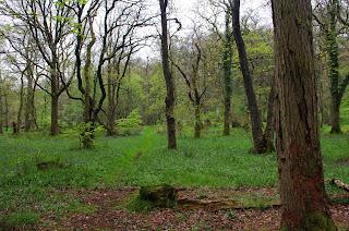 "Sunday morning walk through the bluebells Chris ""It's a flat walk on well made paths!"""