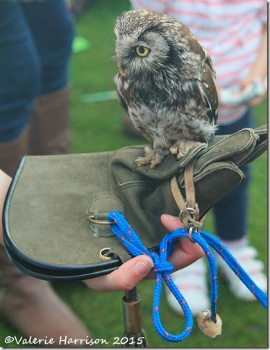 26-Owl-Magic