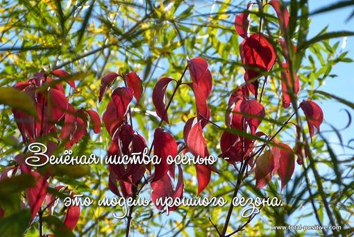Красные листья на фоне зеленой листвы и голубого неба