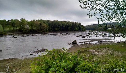 7. afternoon view of river 5-30-15