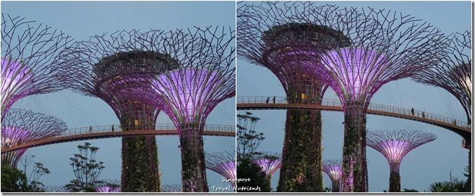 新加坡超級樹燈光秀 (47)