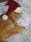 Christmas kitty 12/26