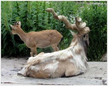 В Московском зоопарке.