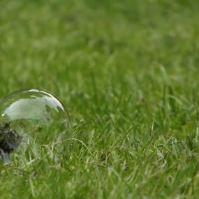 Lone Bubble by Hayley Springall - Nature Up Close Leaves & Grasses ( bubble, grass, alone )