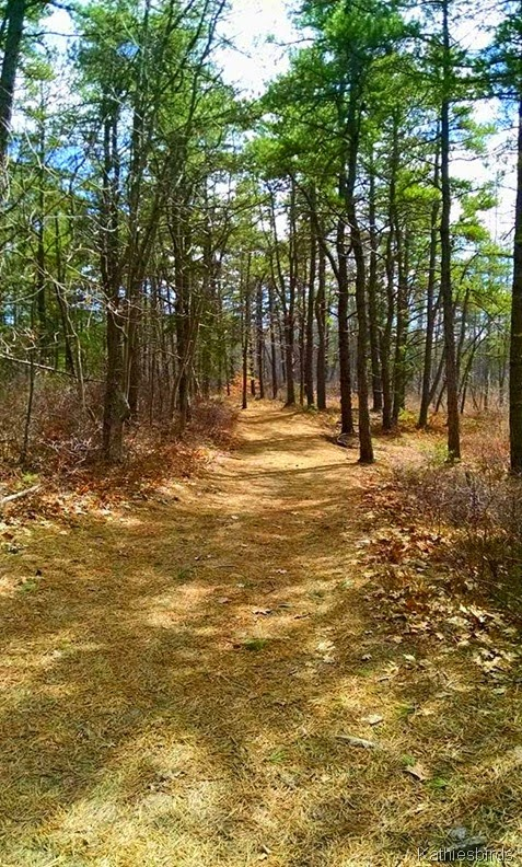 4-17-15 another trail on brunswick town commons