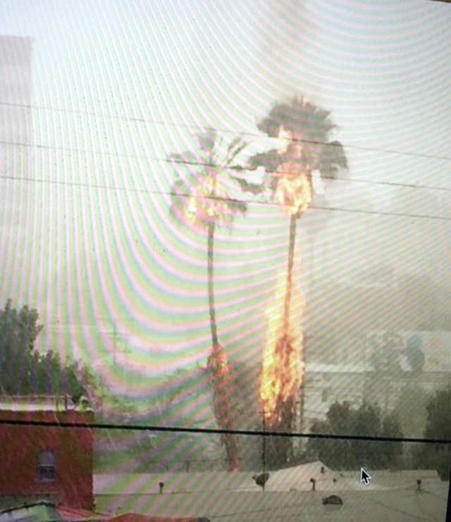 A palm tree burns after being struck by lightning, 19 July 2015. Tropical moisture from what was once Hurricane Dolores prompted flood watches to be issued across the Southwest, from California to Utah and western Colorado. Photo: Linden Ashby / Twitter