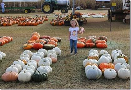 Zoey running through the pumpkins5