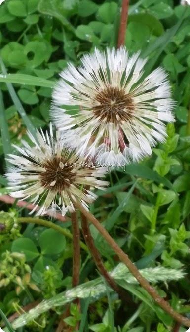 1 flowers