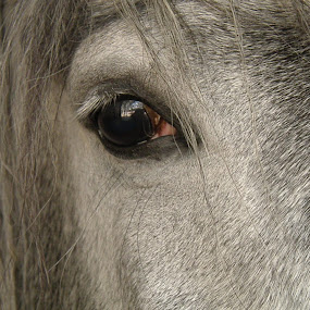 by Yasmin Kader - Animals Horses