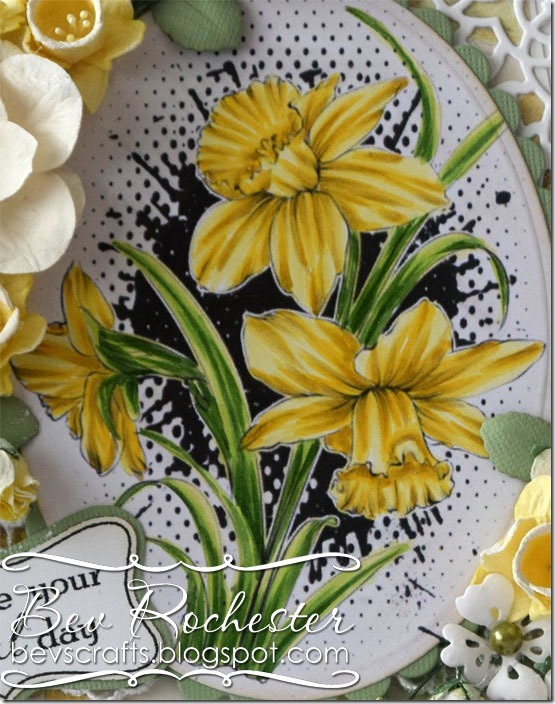 bev-rochester-noor-daffodils1