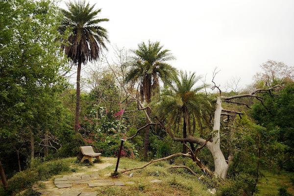 парк агра скамейка лавочка джунгли пальмы
