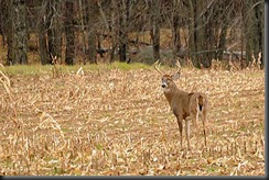 Now that I no longer hunt...they reveal themselves...