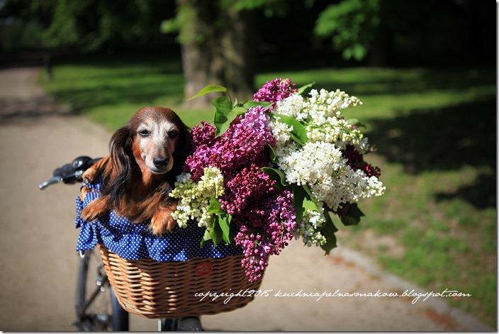 pies w koszyku (5)