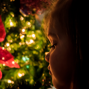 So Serious by Jamie Hodge - Public Holidays Christmas ( lights, christmas lights, christmas, christmas tree, kids,  )