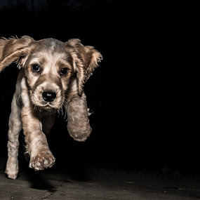 Prancing Pup by Bearded Egg - Animals - Dogs Puppies ( playing, pet, pup, puppy, dog )