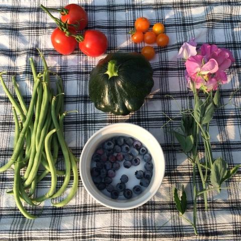 Organic gardening in Seattle