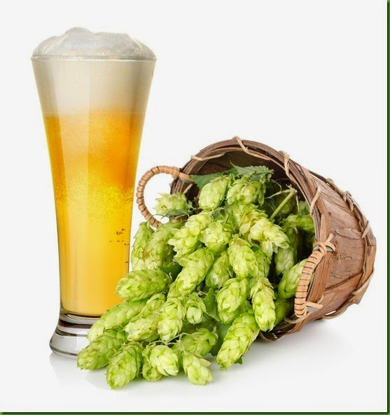 Trepadeira Cerveja AA