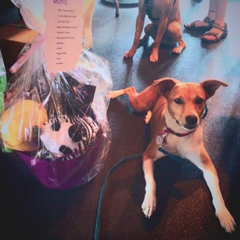 dog with a gift basket