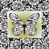 borboletas (61).jpg
