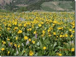 19 Jarbidge Mtn Flowers