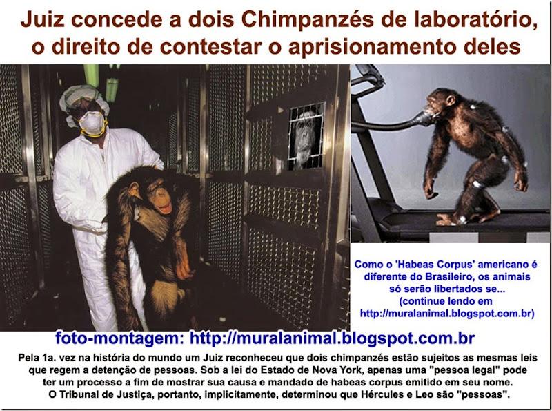 chimpanzes-habeascorpus