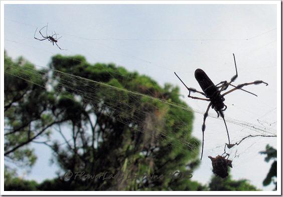 07-15-spider2