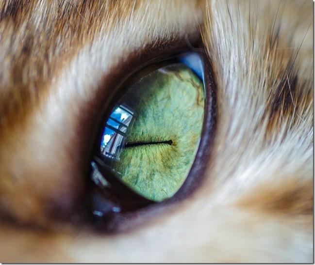Cats Eyes9
