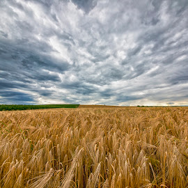 field by Christoph Reiter - Landscapes Prairies, Meadows & Fields ( sky, field, clouds )