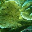 Buck Island Reef - IMGP2364.JPG