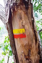 Balise de la forêt de Curral das Freiras